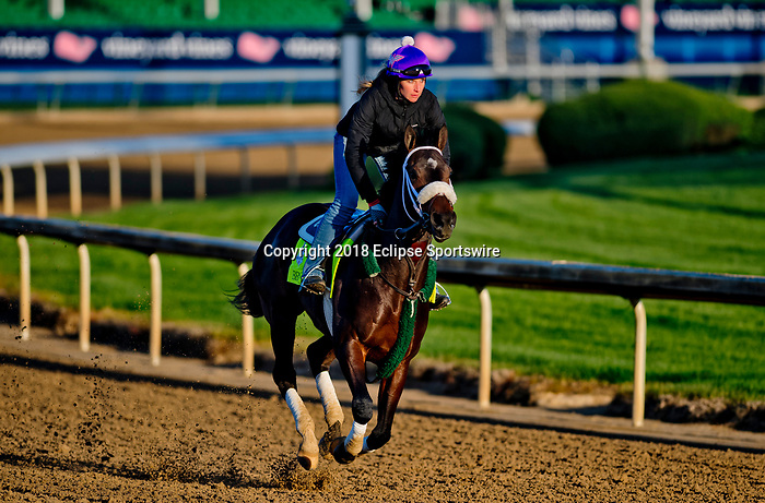 LOUISVILLE, KY - APRIL 30: Bravazo, trained by D. Wayne Lukas, exercises in preparation for the Kentucky Derby at Churchill Downs on April 30, 2018 in Louisville, Kentucky. (Photo by Scott Serio/Eclipse Sportswire/Getty Images)