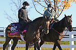 Miss Amulet, trained by trainer Ken Condon, exercises in preparation for the Breeders' Cup Juvenile Fillies Turf at Keeneland Racetrack in Lexington, Kentucky on November 2, 2020.