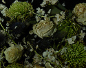 "London, UK. 11.06.2020. ""Liminal""  (Dead flowers floating in water).  Photograph © Jane Hobson."