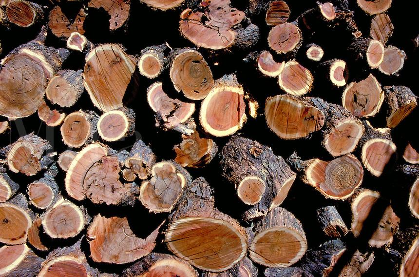 Cut logs of wood.