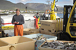 Cod Fish Catch, Skagastrond, Iceland