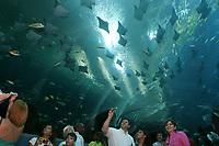 Visitors view, rays and many other marine animals at the Georgia Aquarium in Atlanta, GA