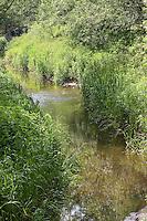 Wiesenbach, Bach mit reicher Ufervegetation, Flachland-Bach, naturnaher Bachlauf
