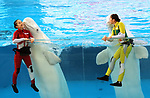 "April 26, 2017, Yokohama, Japan - Kanako Momota (L) and Shiori Tamai (R), members of Japanese girls only pop group ""Momoiro Clover Z"" (MCZ) get kisses from white belugas at the aquarium of the Hakkeijima Sea Paradise in Yokohama, suburban Tokyo on Wednesday, April 26, 2017. The aquarium will start the new attraction with sea aninals featuring a MCZ's TV program for children from April 28.   (Photo by Yoshio Tsunoda/AFLO) LwX -ytd-"