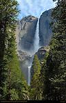 Yosemite Falls Forest Vignette during Spring Flood, Western Approach Trail, Yosemite National Park
