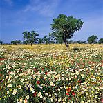 Spain, Balearic Islands, Mallorca, Santany: Meadow of Spring Flowers | Spanien, Balearen, Mallorca, Santany: Blumenwiese
