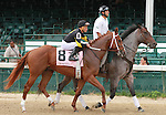 October 01, 2014:  Bold Conquest in the Iroquois Stakes at Churchill Downs on September 6, 2014.  Candice Chavez/ESW/CSM