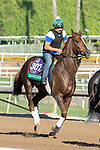 ARCADIA, CA  OCTOBER 26: Breeders' Cup Turf entrant Channel Maker, trained by William I. Mott, exercises in preparation for the Breeders' Cup World Championships at Santa Anita Park in Arcadia, California on October 26, 2019. (Photo by Casey Phillips/Eclipse Sportswire/CSM)