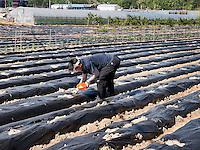 Gemüseanbau im Hahoe Volkskundedorf bei Andong, Provinz Gyeongsangbuk-do, Südkorea, Asien, UNESCO-Weltkulturerbe<br /> Agriculture in Hahoe Folk Village near Andong,  province Gyeongsangbuk-do, South Korea, Asia, UNESCO world-heritage