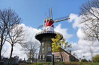Nederland Leiden 2021.  Molen de Valk. De Valk is een stellingmolen en tegewoordig een museum. Rond Koningsdag en Bevrijdingsdag is de molen bekleed met een nederlandse vlag. De Lammermarkt. Foto ANP / Berlinda van Dam
