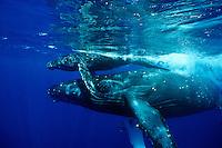 Humpback Whale Photos