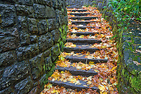 Rock steps at Horestail Falls with fall colored maple leaves. Columbia River Gorge National Scenics Area.  Oregon