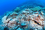Dead reef, destroyed by a typhoon, Yap, Federated States of Micronesia, Pacific Ocean