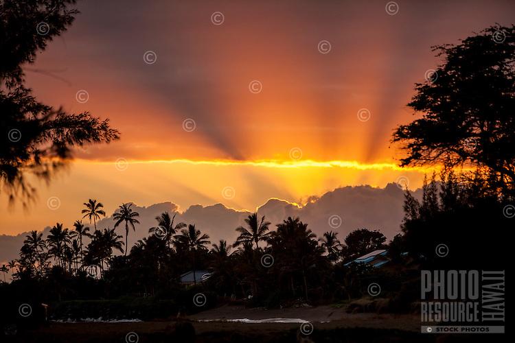 Orange sunset with silhouetted palm trees in Kekaha, Kaua'i