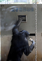A chimpanzee puts an empty can of juice into a recycle bin. A chimpanzee inserts a ten yen coin into a drink vending machine. Chimpanzees in Tama Zoo in the western suberbs of Tokyo buy soft drinks from a vening machine. The zoo, which is seen as one of Japan's most inovative, has installed a vending machine. The Chimps are given a ten yen yen coind which they insert into a vending machine and are given a can of fruit or vegetable juice.  The chimps then put the embty can into the waste machine for recycling.