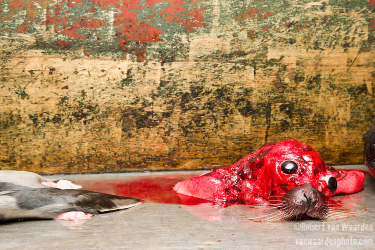 A dead seal for sale at the Nuuk game market in Greenland.