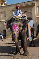 Indien, Festung Amber bei Jaipur, Elefantenritt zum Palast