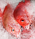 Fresh Fish 06 - Pink snapper on ice