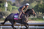 October 27, 2014: Sunset Glow exercises in preparation for the Breeders' Cup Juvenile Fillies Turf at Santa Anita Park in Arcadia, California on October 27, 2014. Zoe Metz/ESW/CSM