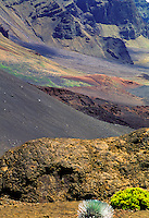 Silversword plant at Haleakala National park, Maui