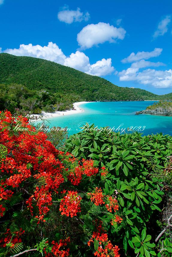 Trunk Bay Beach and flamboyants.Virgin Islands National Park.St. John, US Virgin Islands