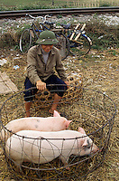 Asie/Vietnam/env d'Hanoi: Marché à Nhu Guynh marchand de porcs