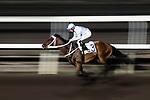 Jockey Douglas Whyte riding King Genki leading the race number 8 at Sha Tin racecourse on November 1, 2017 in Hong Kong, China. Photo by Marcio Machado / Power Sport Images