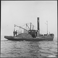 Oyster culture and fishing <br /> ,undated, circa 1956