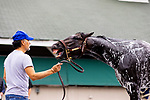 April 29, 2021: Rock Your World plays during his bath at Churchill Downs  as he prepares for the Kentucky Derby in Louisville, Kentucky on April 29, 2021. EversEclipse Sportswire/CSM