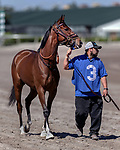 HALLANDALE BEACH, FL - MAR 3:Thewayiam #3 trained by H. Graham Motion is walked to the paddock prior to winning the $100,000 Herecomesthebride Stakes G3 at Gulfstream Park on March 3, 2018 in Hallandale Beach, Florida. (Photo by Bob Aaron/Eclipse Sportswire/Getty Images)