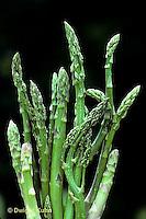HS20-009a  Asparagus - harvested, perennial - Jersey Centennial variety
