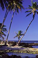 Beach with palm trees at Mauna Lani Bay on the Kohala Coast of the Big Island