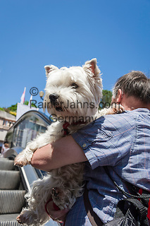 Principality of Monaco, on the French Riviera (Côte d'Azur), district Monte Carlo: dogs on escalators preferably in your arms (West Highland White Terrier) | Fuerstentum Monaco, an der Côte d'Azur, Stadtteil Monte Carlo: Hunde auf Rolltreppen lieber tragen (West Highland White Terrier)