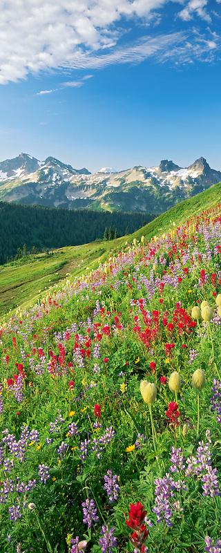 M00044L.tiff   Mixed wildflowers and Tatoosh Mountains. Mt. Rainier National Park. Washington.