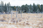 Winter landscape Riding Mountain National Park, Manitoba, Canada.