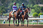 """September 26, 2015: Nyquist in the post parade for the Breeders' Cup """"Win and You're In"""" FrontRunner Stakes at Santa Anita Park in Arcadia, California. Zoe Metz/ESW/CSM"""