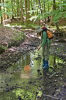 Mädchen keschert an einem natürlichen Waldbach, Bach, Keschern, Kescher