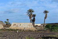 Palmen bei Calhau, Sao Vicente, Kapverden, Afrika