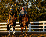 November 2, 2020: Hot Rod Charlie, trained by trainer Doug F. O'Neill, exercises in preparation for the Breeders' Cup Juvenile at Keeneland Racetrack in Lexington, Kentucky on November 2, 2020. Scott Serio/Eclipse Sportswire/Breeders Cup/CSM