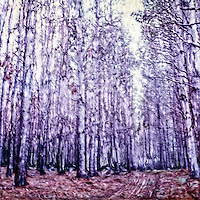 Pine wood in the rain forest.<br /> <br /> -Limited Edition of 50 Prints