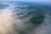 Morning ground fog over forest