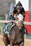 #9 Ireland with jockey Norberto Arroyo, Jr. aboard during the running of the Honeybee Stakes (Grade III) at Oaklawn Park in Hot Springs, Arkansas-USA on March 8, 2014. (Credit Image: © Justin Manning/Eclipse/ZUMAPRESS.com)