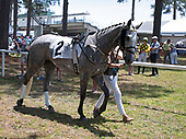 2nd Filly & Mare Maiden Hurdle - Paddy Wears Prada