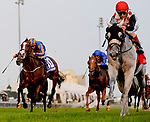 TORONTO, ON - SEPTEMBER 16: World Approval #1 (red cap), ridden by John Velazquez, wins the Ricoh Woodbine Mile on Ricoh Woodbine Mile Day at Woodbine Racetrack on September 16, 2017 in Toronto, Ontario. (Photo by Scott Serio/Eclipse Sportswire/Getty Images)