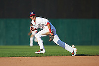 Auburn Doubledays shortstop Clayton Brandt (3) makes a diving attempt at a hit during a game against the Williamsport Crosscutters on June 26, 2016 at Falcon Park in Auburn, New York.  Auburn defeated Williamsport 3-1.  (Mike Janes/Four Seam Images)