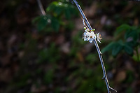 White blossoms on a tree branch against a soft background of green leaves with room for text.