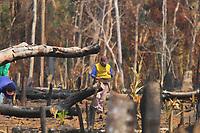 AMAZONAS-HUMAITÁ, 29.08.2019: QUEIMADAS-HUMAITÁ. Homens plantam macacheira em Área desmatada e queimada na parte rural de Humaitá, na manhã desta quinta-feira (29). Humaitá fica no sul do Amazonas.<br /> Foto: Sandro Pereira/Codigo19