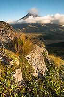 Sunset over Taranaki, Mt. Egmont and alpine vegetation, Egmont National Park, North Island, New Zealand, NZ