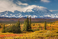 Autumn tundra and the summit of Denali, Denali National Park, Alaska.