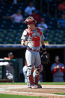 Glendale Desert Dogs Carson Kelly (71), of the St. Louis Cardinals organization, during a game against the Surprise Saguaros on October 22, 2016 at Surprise Stadium in Surprise, Arizona.  Surprise defeated Glendale 10-8.  (Mike Janes/Four Seam Images)